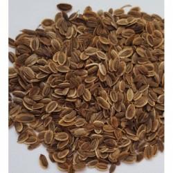 Nasiona na kiełki - Koper 15g