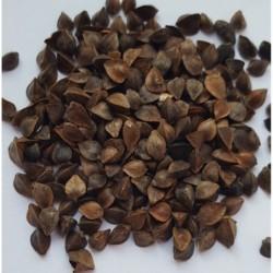 Nasiona na kiełki - Gryka 25g